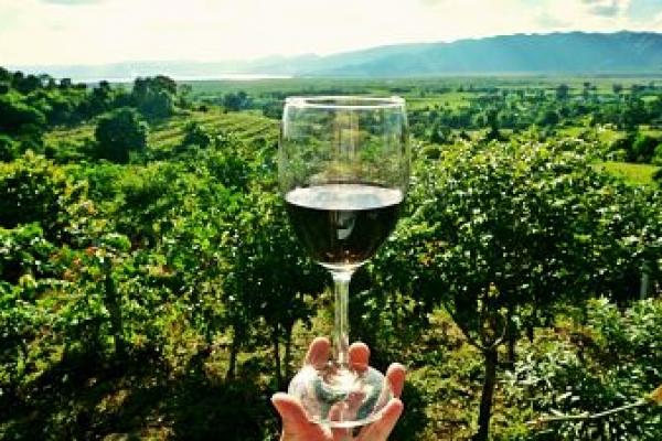 wine-2173239-1920-1-opt000EB1F3-78AF-2452-ABFA-38738AFA37EB.jpg